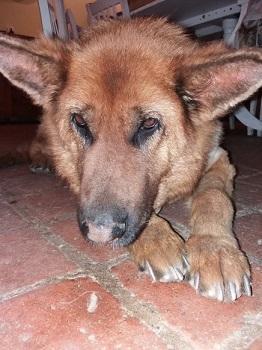 Alba the dog
