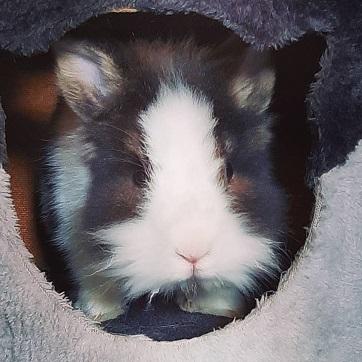 Jamie the rabbit